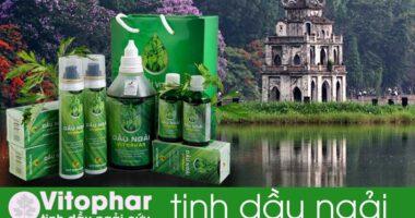 Địa chỉ bán tinh dầu ngải cứu Hà Nội 100% chính hãng!